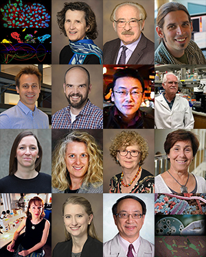 Teaser image of speakers for spring 2019 Weekly Colloquium on Problems in the Biology of Complex Diseases at University of Arizona