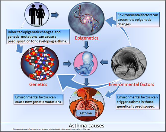 Factors that contribute to asthma