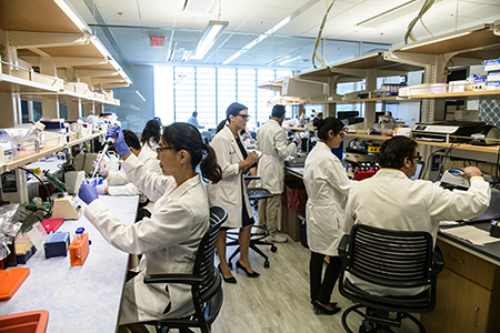 At work in the Hecker Lab. Left to right: Sunny Palumbo, PhD, Louise Hecker, PhD, Reena Chawla, PhD, and Sabbir Kahn, PhD. (Photo: Kris Hanning/UAHS Biocommunications)