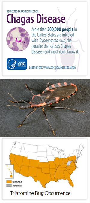 Kissing bug factoid and U.S. map of where they can be found - CDC