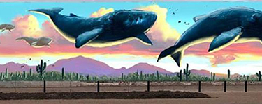 Flying whales by Joe Pagac | Mural Location: 2320 N. Campbell Ave. Tucson, AZ 85719