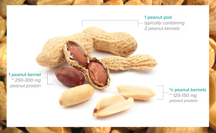 Image result for oral immunotherapy for peanut allergy