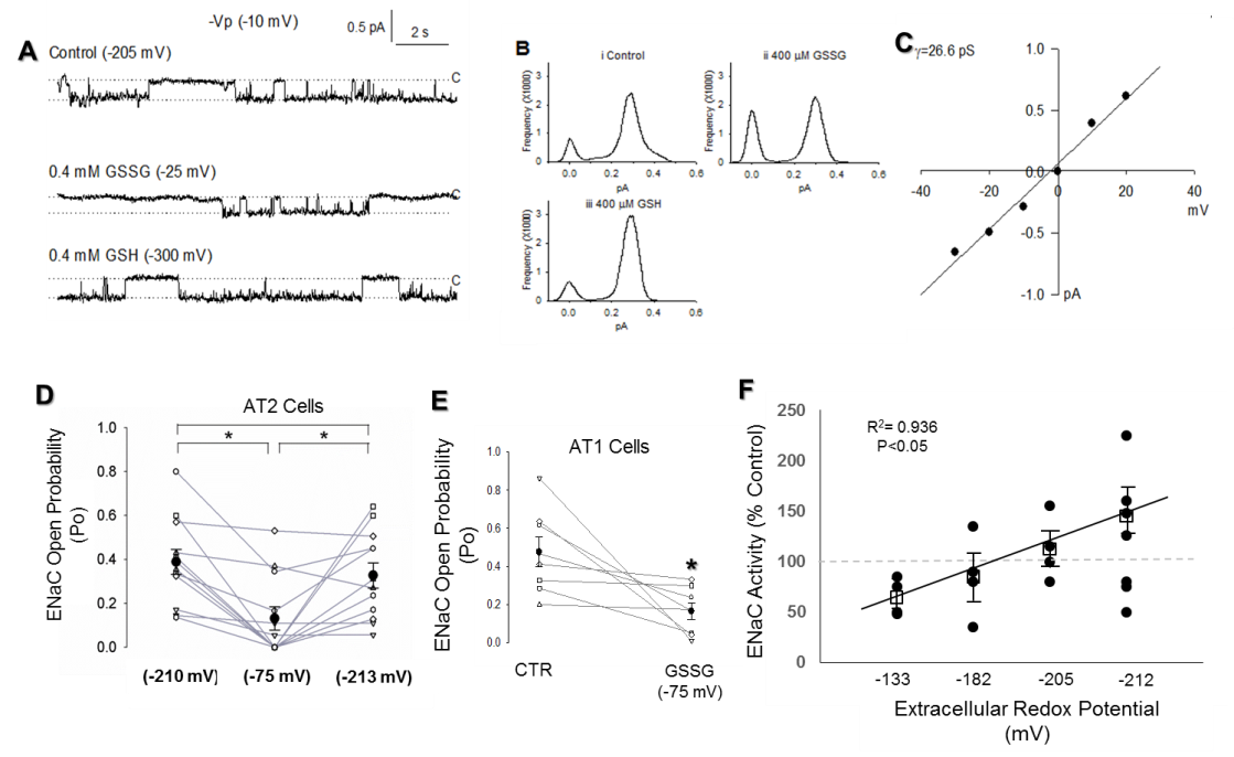 Figure: Extracellular shifts in glutathione (GSH)/glutathione disulfide (GSSG) glutathione redox (Eh) potential affect ENaC open probability (Po). A) Representative portions of a trace taken from a single channel recording of T2 cell (-10mV (-Vp)) is shown. Closed states (c) are indicated by dashed line and # indicates a break from continual recording. B) Point amplitude histograms for data presented in A; peaks in the distribution represent 0 or 1 open channel. C) Current voltage relationship of representative trace shown in A, with a calculated conductance (γ=26.6 pS). D) Dot plot of 12 separate T2 cell shown effect of control (-210 mV), GSSG (-75mV) and then GSH (-213 mV) sequentially added on ENaC Po. *=P<0.05. E) GSSG (-75 mV) similarly decreases ENaC Po in T1 cells. F) Percent control values for individual cells (circles), before and after adding a mixture of GSH and GSSG (redox potentials ranging from -300 to -100 mV), calculated by dividing Po before and after addition of GSH/GSSG and multiplied by 100. Open squares with error bars represent mean ± S.E. for each redox potential. Linear regression was performed to determine the best fit relationship between redox potential and ENaC activity.