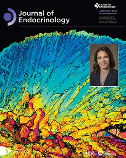 Teaser image with Dr. Jennifer Stern on cover of the Journal of Endocrinology