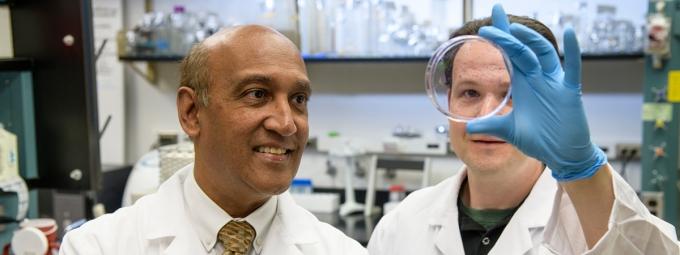 Drs. Daruak Mahadevan and Eric Weterings examine cancer cells in a petri dish